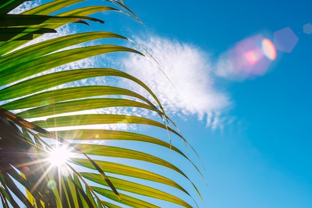 Green palm leaf with sun beam and blue sky background.