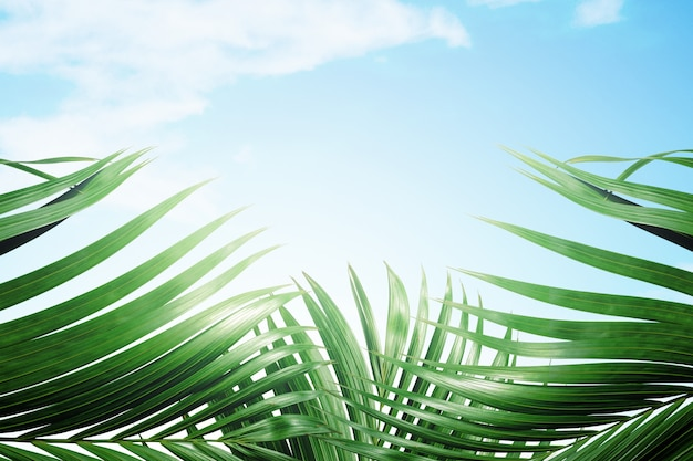 Green palm leaves on blue sky background