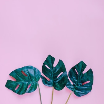 Green palm leaves on pink background with copy space, spring and summer concept