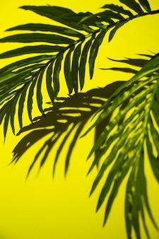 黄色の背景に緑のヤシの葉