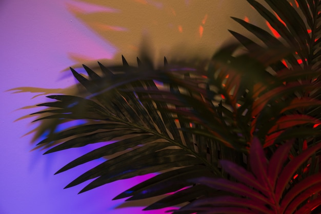 Green palm leaves on purple backdrop