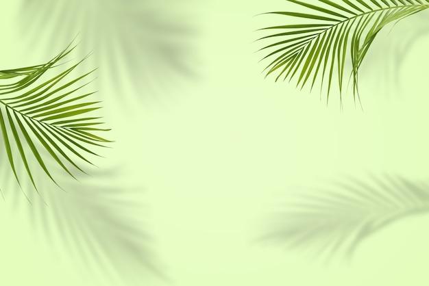 Отражение зеленых пальмовых листьев в тропическом лесу, изолированные на пастельно-зеленом фоне