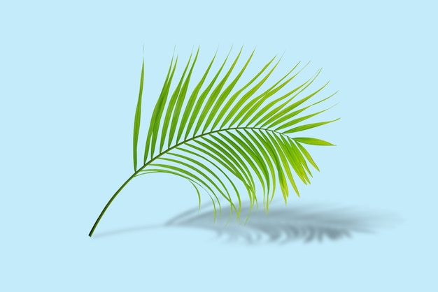 Green palm leaves reflection in tropical forest isolated on pastel green background