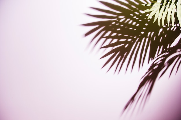 Green palm leaves shadow on pink background