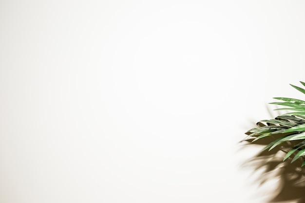 Green palm leaves and shadow on white background