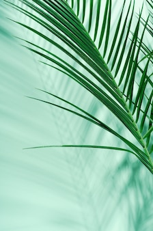Green palm leaves and their shadow on a green wall