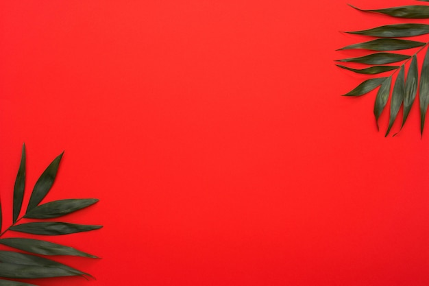 Green palm leaves twig at the corner of bright red background