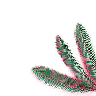 Green palm leaves with coral shadow on the corner of white background