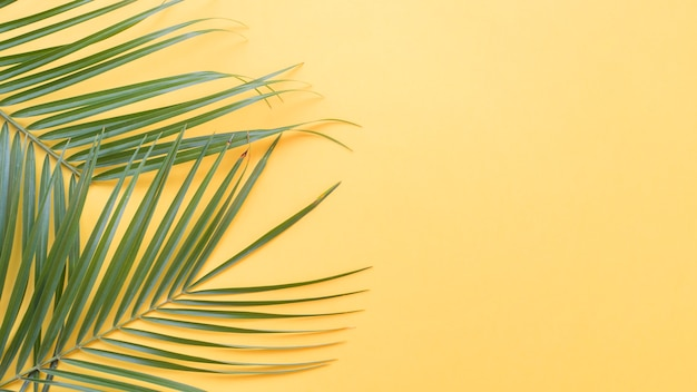 Green palm leaves on yellow backdrop