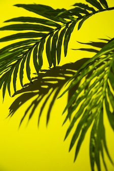 Green palm leaves on yellow background