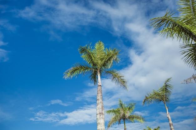 구름과 푸른 하늘에 그린 팜