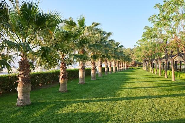 Зеленый пальмовый парк и их тени на траве.