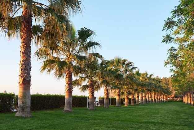 Green palm park and their shadows on the grass.