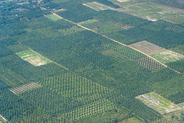 비행기 창에서 볼 수 있는 태국의 녹색 야자 농장. 자연 배경입니다. 코코넛과 야자 농장의 항공 사진