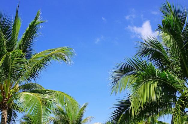 青空の背景に緑のヤシの木