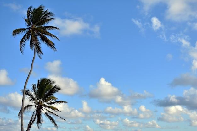 푸른 하늘에 녹색 야자수