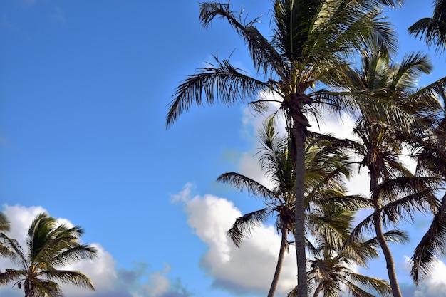青い空を背景に緑のヤシの木