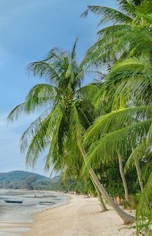 Green palm trees in the beach
