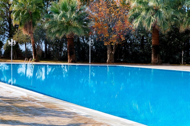 Green palm trees on a pool with azure water next to a yellowing autumn tree