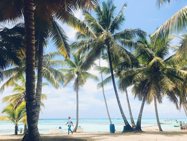 Green palms raise up to the sky on the sunny beach