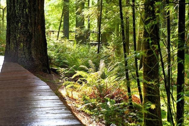 따뜻한 빛으로 일출 녹색 공원입니다. 천연 온천 환경