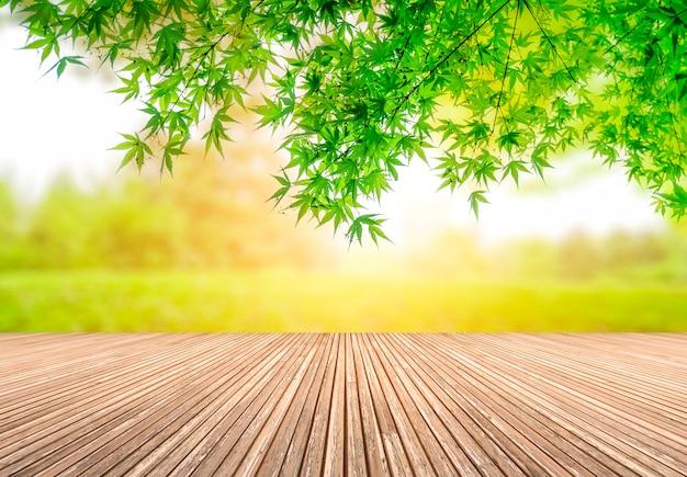 녹색 공원 전망