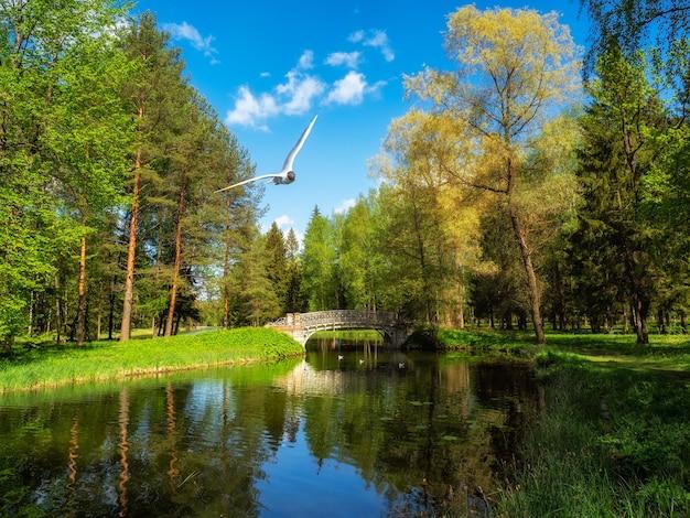 池に架かる橋のある緑豊かな公園。美しく、落ち着いてリラックスできる景色。ガッチナ。