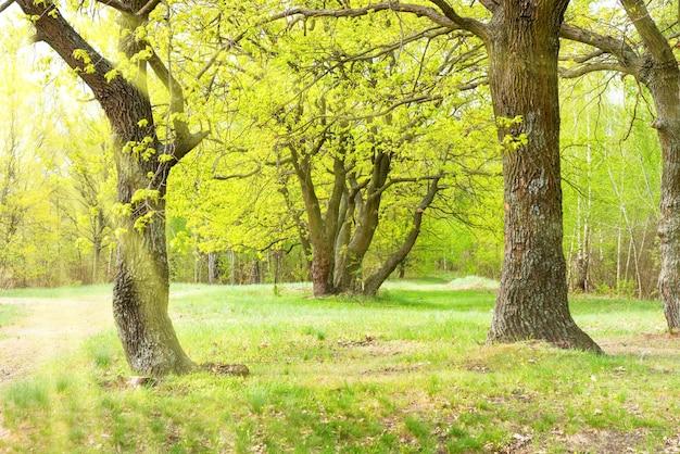 日当たりの良い芝生の上に樫の木と草のある緑豊かな公園