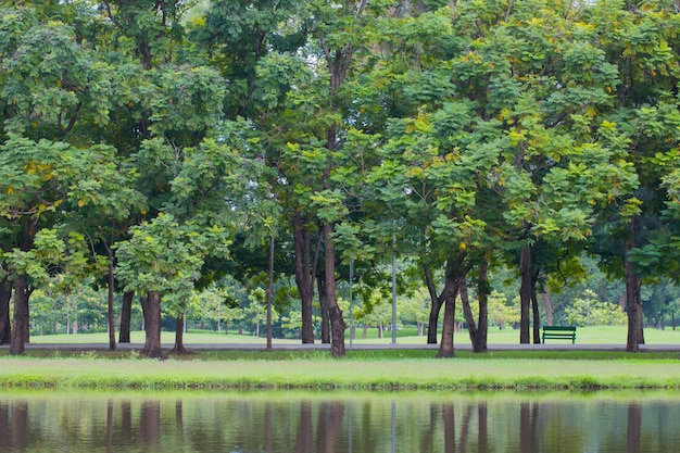 Green park with trees and grass beside pond in park.
