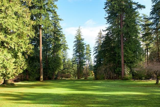 日当たりの良い光の下で公園に木がある緑豊かな公園