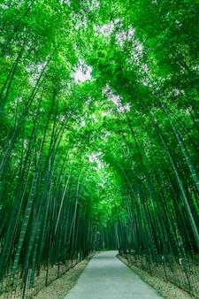 緑の公園 無料写真