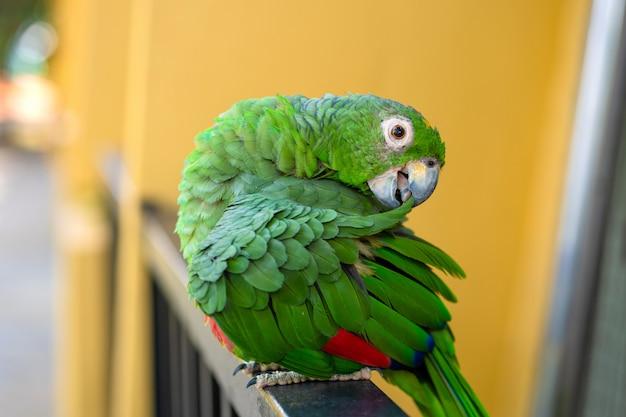 Green parrot close-up portrait.