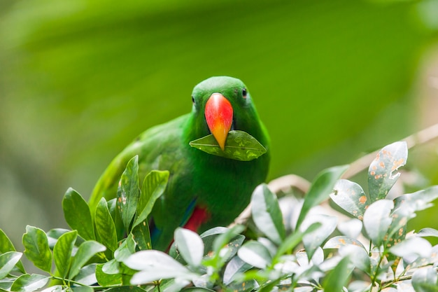 Green parrot with leaf in its beak