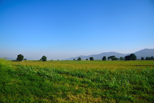 Green pasture land in landscape