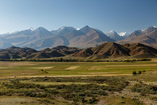 キルギスタンのイシククル湖近くの雪に覆われた山々を背景にした緑の牧草地。