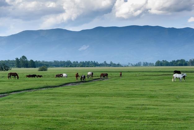 牧場の緑の牧草地。