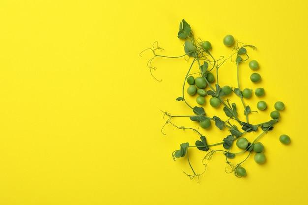 黄色の背景に緑のエンドウ豆の種子と小枝