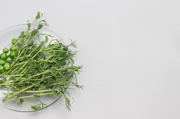 녹색 완두콩 콩나물과 유리 접시에 녹색 완두콩. 회색 배경. 평평하다. 공간 복사