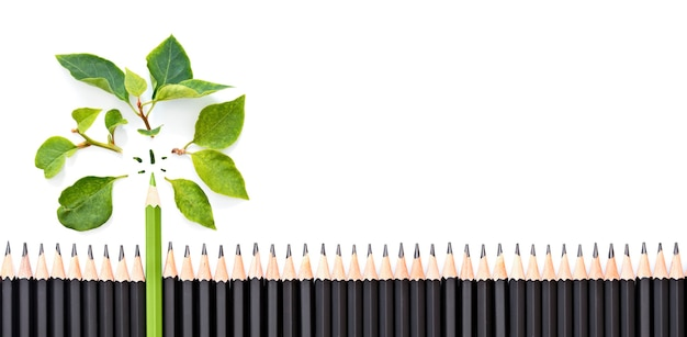Green pencil with fresh green leaf's on a large group of black pencils, isolated on white background, green eco concept, banner