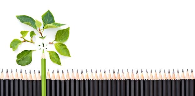 白い背景、緑のエココンセプト、バナーで隔離の黒い鉛筆の大規模なグループに新鮮な緑の葉と緑の鉛筆