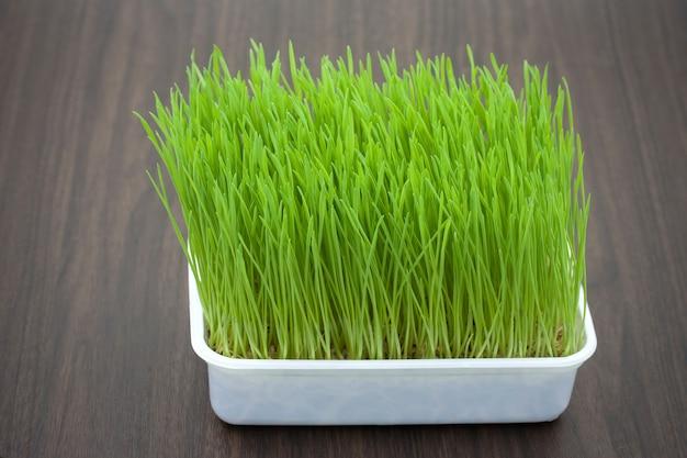 Green pet grass, cat grass