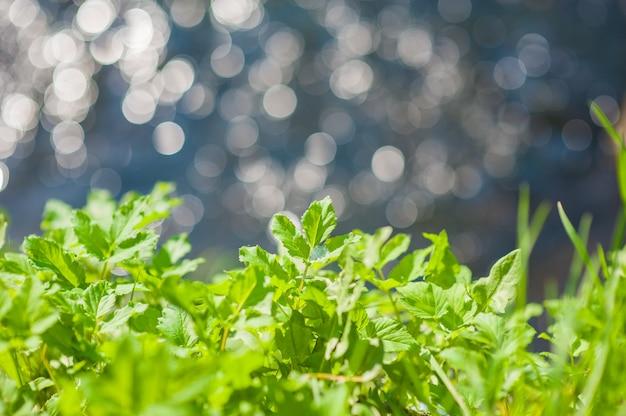 Конец-вверх зеленых лепестков в природе. наступление лета на природе. заделывают зеленого цветка ранней весной