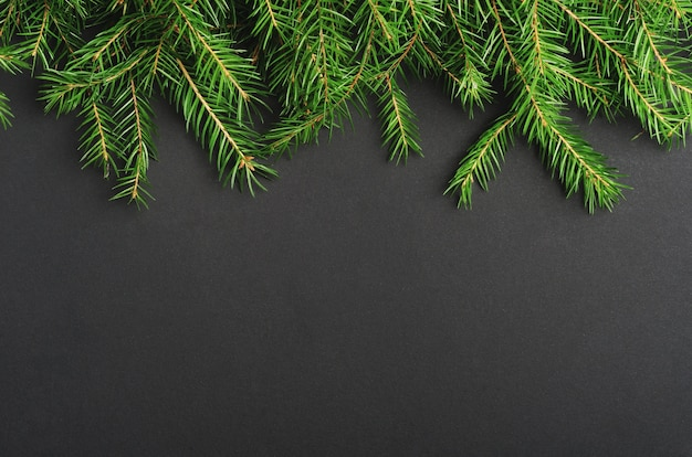 Green pine, fir-tree branches close up background.