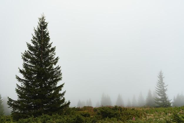 濃霧、広い屋外の背景のマウントスロープ上の緑の松林