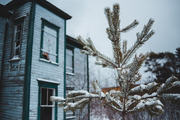 Green pine tree covered with snow near house