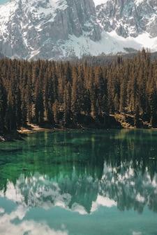 水域近くの緑の松の木