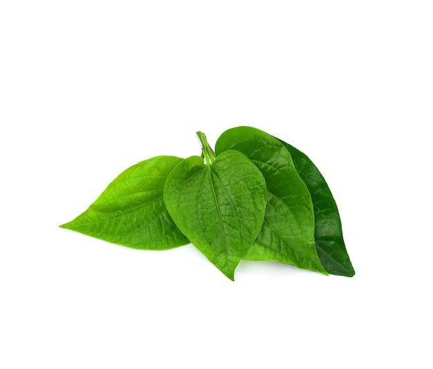 白い背景で隔離の緑のパイパーキンマの葉。タイのハーブ、タイ料理(wildbetal leafbush)(piper sarmentosum roxb)