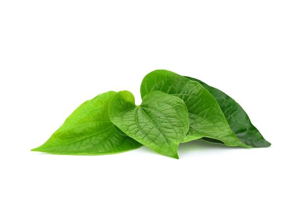 白で隔離される緑のパイパーキンマの葉