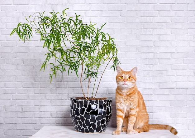 白い部屋の緑の植物と猫