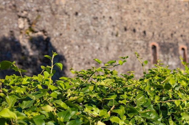 Green plant background wall background